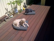 Dogs love Nex Gen composite decking